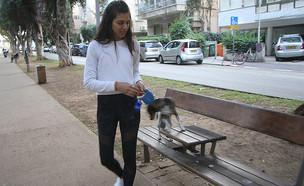 שלומית מלכה בטיול עם הכלב (צילום: פול סגל)