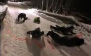 הבילוי של השוטרים: מרוץ בשלג (צילום: מתוך הפייסבוק של Politiet på Heimdal, Melhus og Klæbu, חדשות)