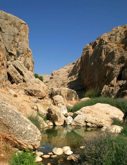 שמורת טבע נחל פרת (צילום: דורון ניסים, רשות הטבע והגנים)