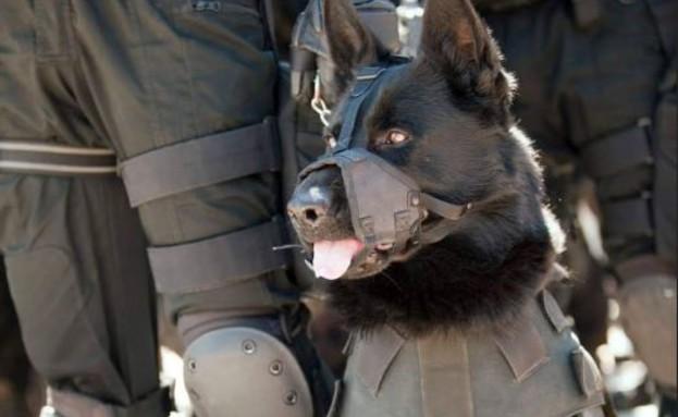 """כלב הימ""""מ (צילום: דוברות מג""""ב)"""