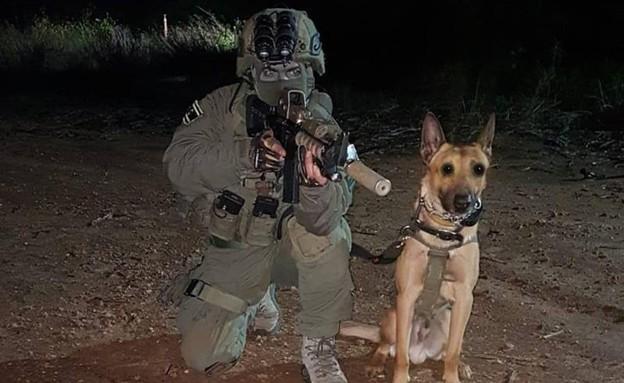 """הכלב זילי (צילום: דוברות מג""""ב)"""