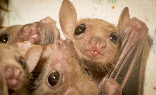 מצילת עטלפים (צילום: Sapir Lustigman )