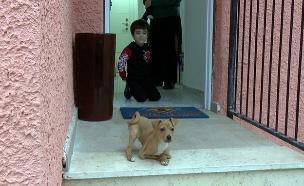ילד מיוחד, כלב מיוחד (צילום: החדשות)