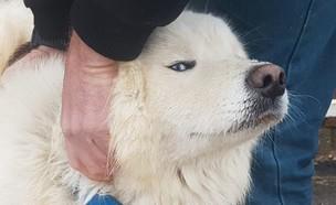 הכלב שנחטף עבור כופר (צילום:  הדר טנדלר, משטרת ישראל)
