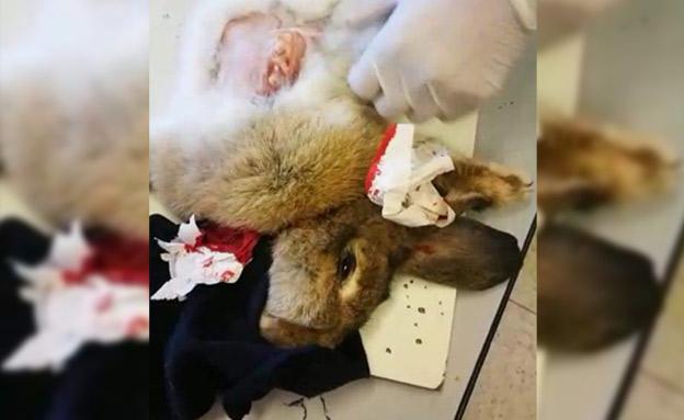 מורים שחטו ארנבות לעיני הילדים (צילום: חדשות)