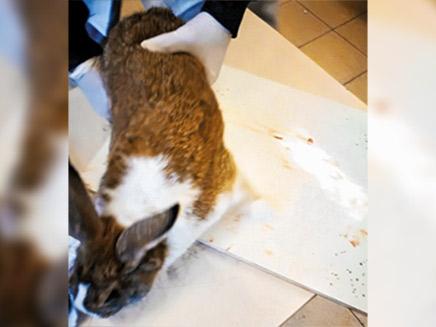 מורים שחטו ארנבות לעיני הילדים