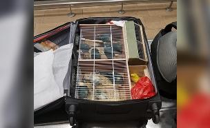 14 ציפורים בשווי 14 אלף שקלים (צילום: משרד החקלאות, חדשות)
