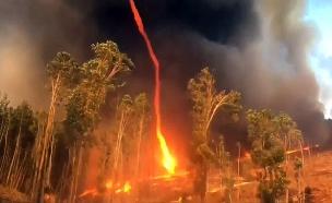 תיעוד משריפת האורנים (צילום: רויטרס, חדשות)