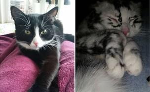אלי החתולה (צילום: elli.vitiligo, instagram)