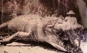 מלך הסוואנה (צילום: Imgur/Imakeyoulaughlongtime)