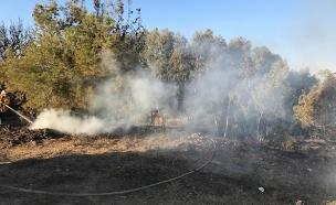 שריפות בעקבות בלוני תבערה בעוטף עזה (צילום: אושרי צימר, חדשות)