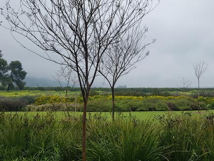נוף חורפי (צילום: ארנון שוורצמן)