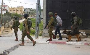 מעצרים בסלפית (צילום: ידיעות מהשטח, חדשות)