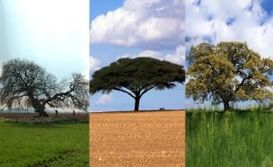 """עצי טו בשבט (צילום: קק""""ל, חדשות)"""