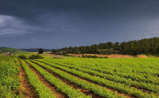 נוף שפלת יהודה (צילום: לימור הולץ)