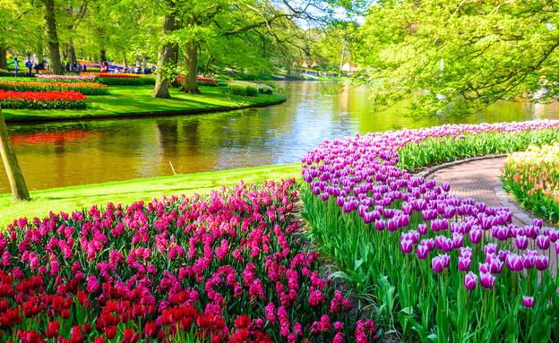 הולנד (צילום: Olena Z, shutterstock)