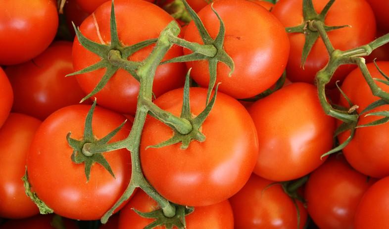 עגבניות  (צילום: lars-blankers, unsplash)