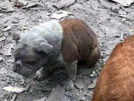 הכלבים ששרדו (צילום: דן אסולין, חדשות)