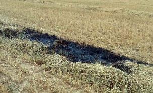 שדה שרוף בעוטף, היום (צילום: בטחון אשכול, חדשות)