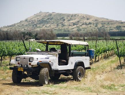 סיור כרמים בארץ היין רמת הגולן