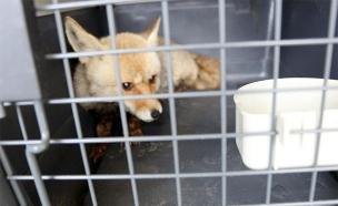 """בעלי חיים שחולצו מרצועת עזה (צילום: דוברות מתפ""""ש, חדשות)"""