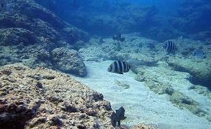 הצצה יוצאת דופן לשמורות הטבע הימיות של ישראל (צילום: שחר חייקין, חדשות)