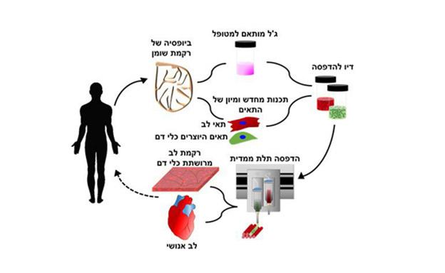 תהליך הדפסת הלב (צילום: אוניברסיטת תל אביב, חדשות)
