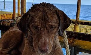 הכלבה שנמצאה בלב האוקיינוס בתאילנד (צילום: פייסבוק WATCHDOG THAILAND)