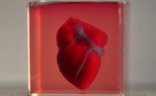 הלב המודפס (צילום: אוניברסיטת תל אביב, חדשות)