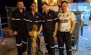 עובדי האסדה עם הכלב השורד (צילום: CNN, חדשות)