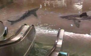 כרישים בבניין (צילום: EMGN)