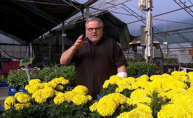 אילו פרחים הכי מתאים לגדל באביב? (צילום: החדשות)