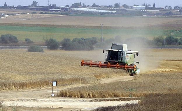 תיעוד: כך נשמע הטרור החקלאי בצפון (צילום: החדשות)