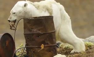 דוח מדאיג: מליון וחצי מינים בסכנה (צילום: פול ניקלן, חדשות)