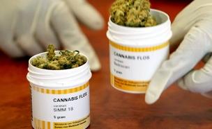מהפכה: קנאביס רפואי ייהפך לחוקי (צילום: רויטרס, חדשות)