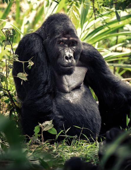 טיול באוגנדה