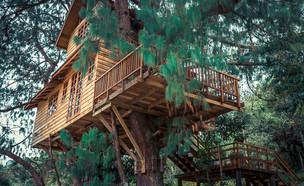 בית עץ (צילום: shutterstock / Luciana Rinaldi)