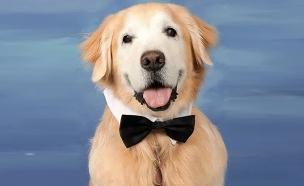 """הכלבים הוכנסו לספר המחזור. צפו (צילום: מתוך ספר המחזור של התיכון בארה""""ב, חדשות)"""