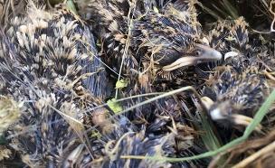 הגוזלים שחולצו (צילום: רשות הטבע והגנים, חדשות)