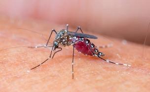 הנשק הסודי נגד עקיצות היתושים (צילום: 123RF, חדשות)