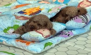 צפו: מעון כלבלבים ייחודי בדרום קוריאה (צילום: cctv+, חדשות)