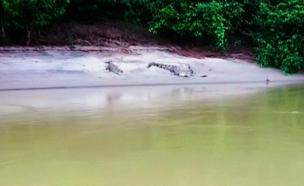 צפו: בדרך לבית הספר תלמידים חוצים נהר מלא תנינים (צילום: אינקס, חדשות)