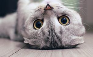 חתול (צילום: By Dafna A.meron, shutterstock)