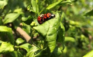 """נחיל חיפושיות התגלה בתמונת המכ""""ם (צילום: רויטרס, חדשות)"""