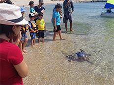 המבצע להצלת דור העתיד של צבי הים