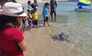צפו: מבצע ההצלה בחוף (צילום: יניב לוי, רשות הטבע והגנים, חדשות)