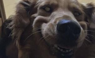 כלב מפחיד (צילום: טוויטר\camicuffari)