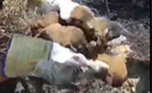 תיעוד: 5 גורי כלבים חולצו משרפה (צילום: כבאות והצלה נגב, חדשות)