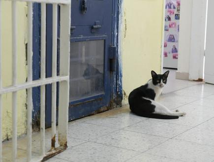 בית הסוהר נווה תרצה (צילום: יונתן בלום)