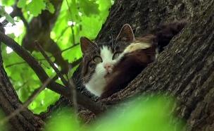 החתול שלא יורד מהעץ 6 שנים (צילום: AP, חדשות)